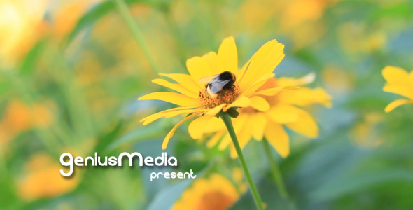 VideoHive - Photo Gallery on a Flower Holiday